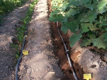 verduras-ecologicas-de-otono-100_3470