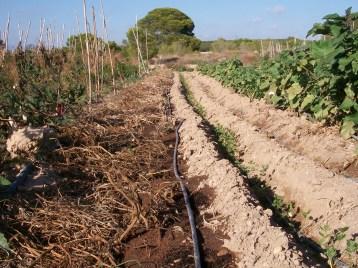 verduras-ecologicas-de-otono-100_3474