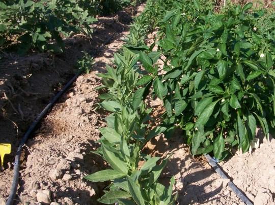 verduras-ecologicas-de-otono-100_3476