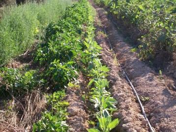 verduras-ecologicas-de-otono-100_3485