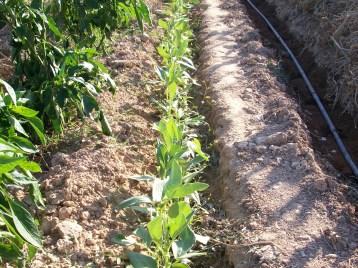 verduras-ecologicas-de-otono-100_3492