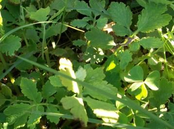 verduras-ecologicas-de-otono-bacarot-granja-masphael-100_3633
