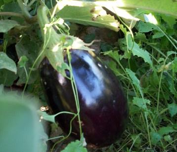 verduras-ecologicas-de-otono-bacarot-granja-masphael-100_3682