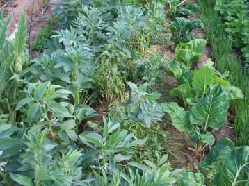 verduras-ecologicas-de-otono-bacarot-alicante-100_3776-2