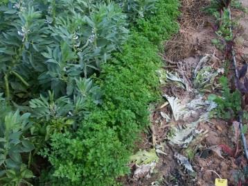 verduras-ecologicas-de-otono-bacarot-alicante-100_3778