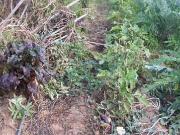 verduras-ecologicas-de-otono-bacarot-alicante-100_3787-2