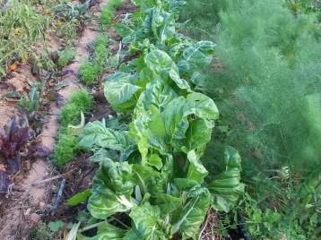 verduras-ecologicas-de-otono-bacarot-alicante-100_3801