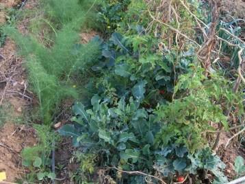 verduras-ecologicas-de-otono-bacarot-alicante-100_3809-2