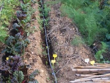 verduras-ecologicas-de-otono-bacarot-alicante-100_3810-2