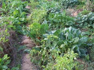 verduras-ecologicas-de-otono-bacarot-alicante-100_3837-2