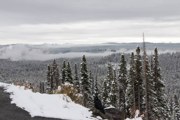 Yellowstone in de sneeuw – Met recht een winter wonderland!