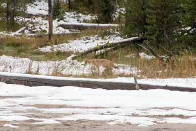 Marco-Bos-Yellowstone-21-R
