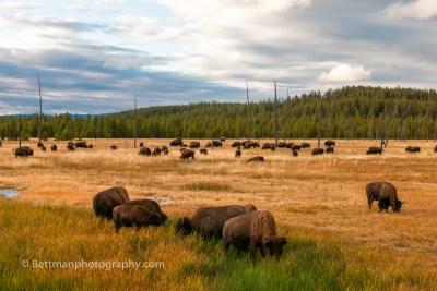 Yellowstone Nationaal Park - 00004