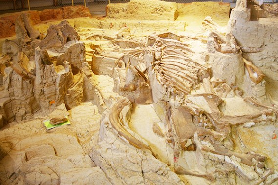 Mammoth site South Dakota