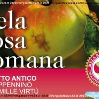 Calendario della Mela Rosa Romana dell'Appennino da oggi in distribuzione
