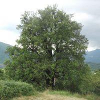 Appennino Bolognese - Salva gli alberi monumentali e ottieni finanziamenti regionali