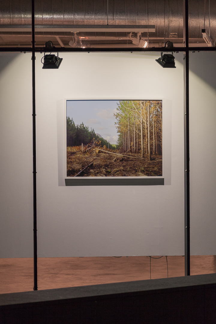 Katrin Koenning, Beerburrum State Forest #1 (You used to ride your Bike through Here), 2012 // The Leftovers