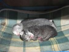 Egynapos kiscicák