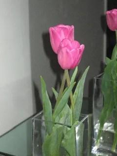 El tulipán
