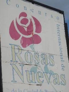 rosas nuevas