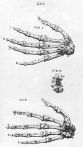 Hands (bones)