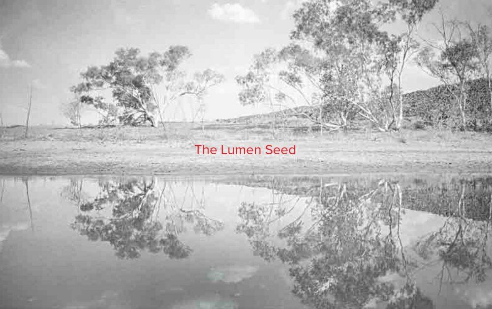 The Lumen Seed (Judith Crispin)