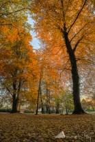 Altdöbern_Herbst (4)