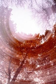 Colours of Autumn (5)
