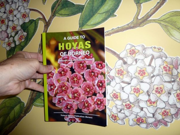 A Guide to the Hoyas of Borneo