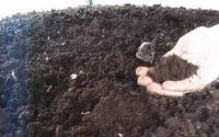 Vermicompost or worm castings