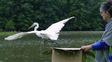 Caring for Injured Wild Birds