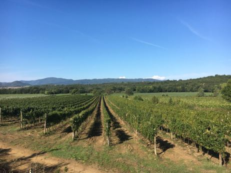 italie-toscane-baratti-suvereto-serraiola-alta-vernie-par-la-vie-zb