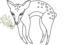 deer-sketches