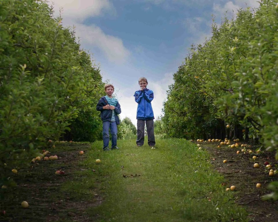 two boys standing between apple trees in an orchard