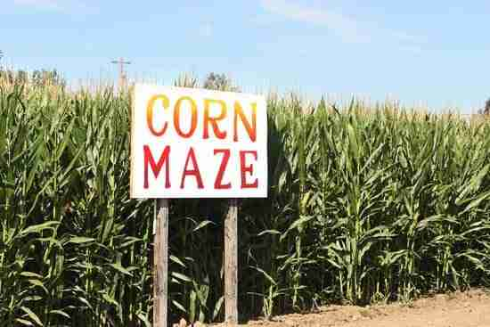 A sign at the entrance of a corn maze - the perfect place for an autumn photoshoot