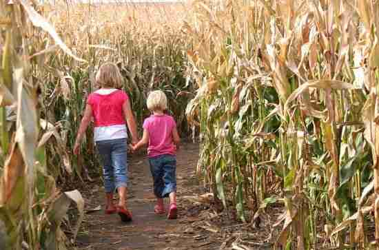Sisters hold hands while walking through a corn maze at an autumn photoshoot