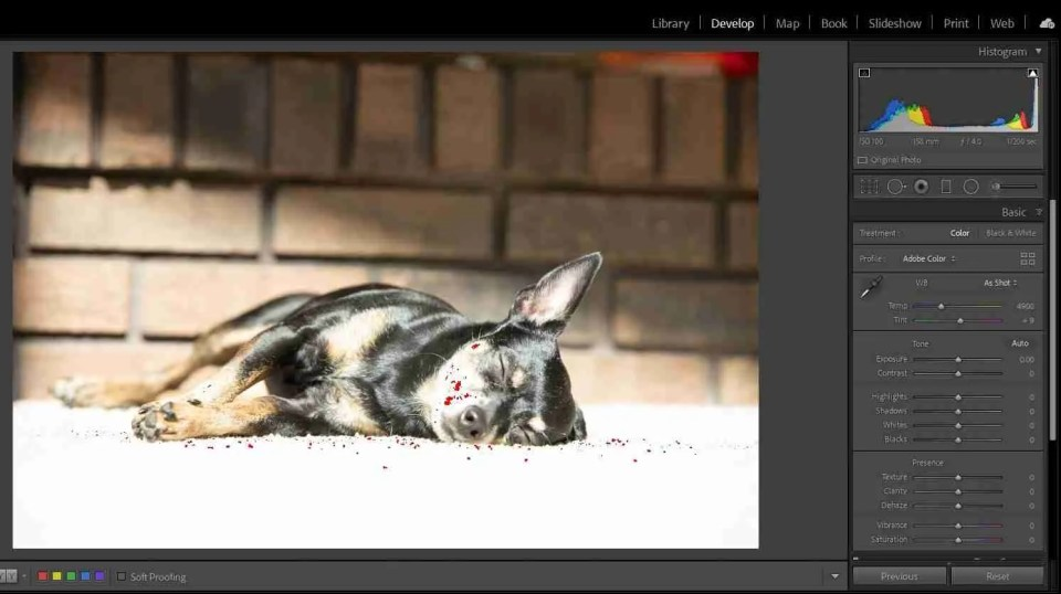 Calculating exposure helps avoid clipping as shown in this image of a dog lounging in the sun