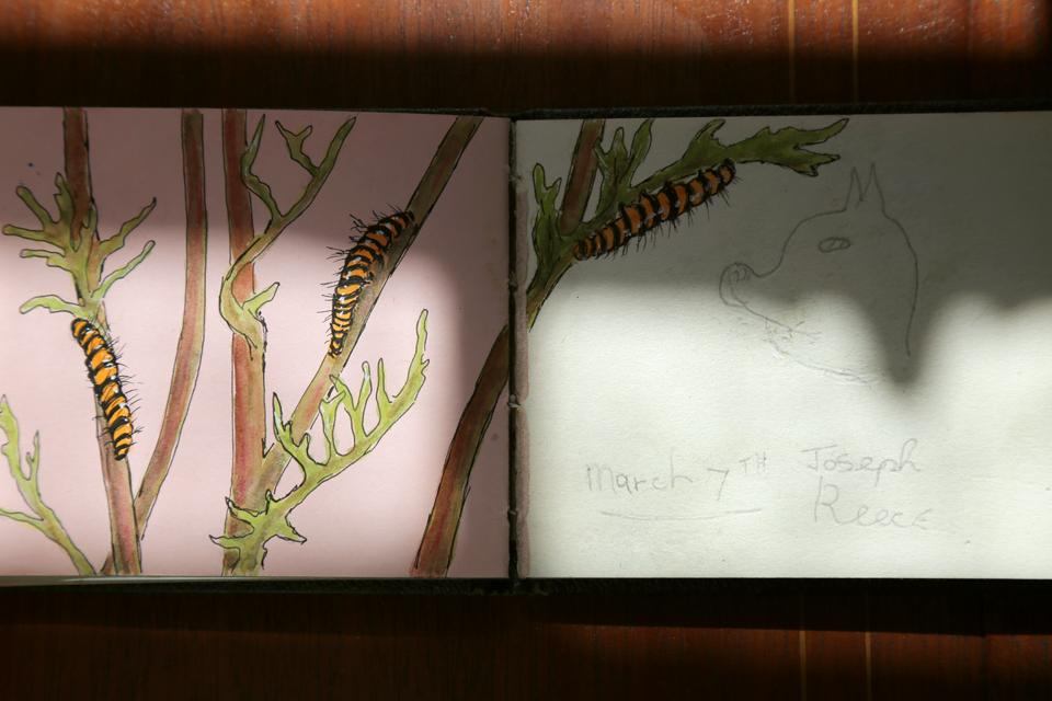 seasonal-journal-veronica-roth-24-copy-copy