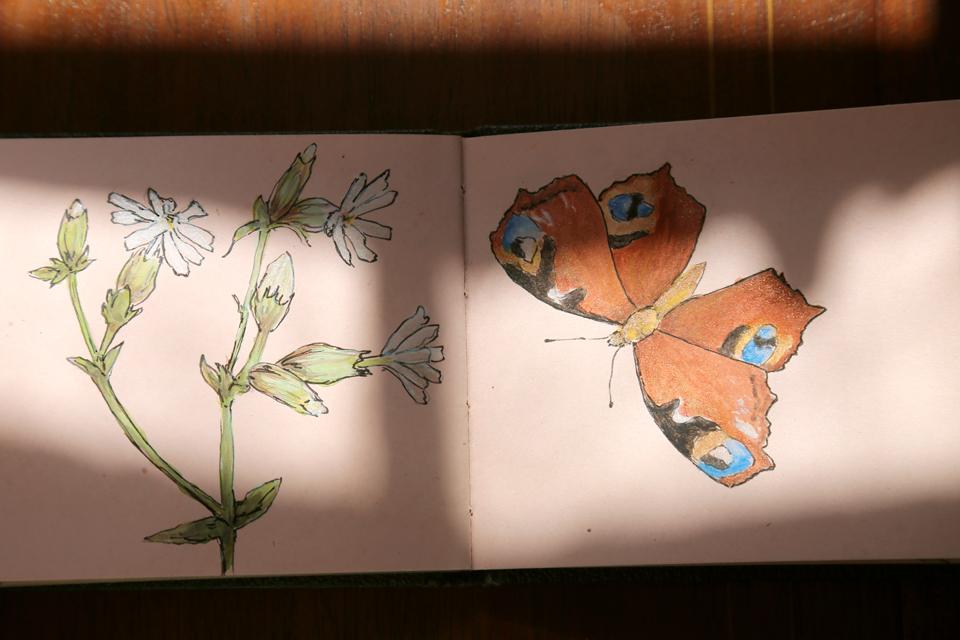 seasonal-journal-veronica-roth-32-copy-copy