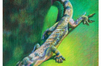 Step by step drawing in colored pencil how to draw a gecko
