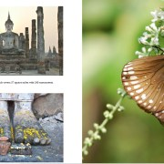 thai-book-pages-promo7