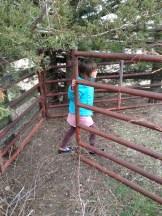 Rowan around gate