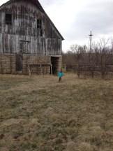 Rowan by barn