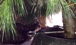 Feline birdwatcher 2