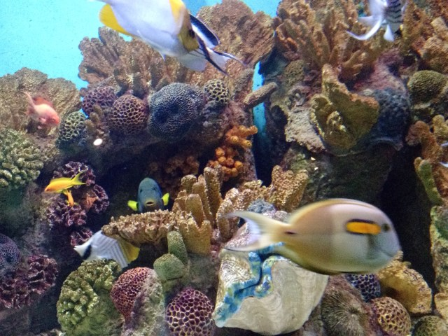 Fish in the coral reef