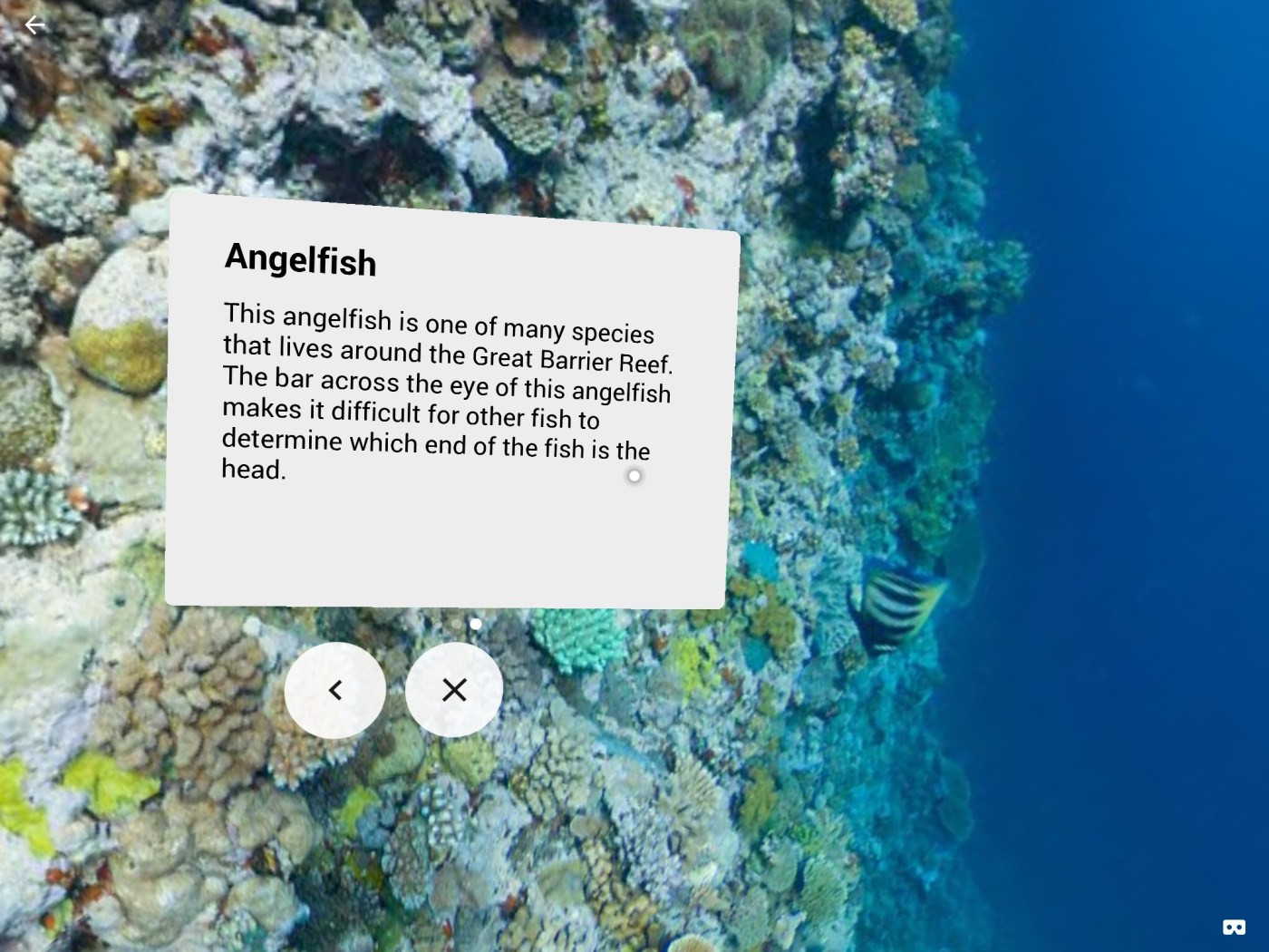 A screenshot of the Google expeditions app that shows an Angelfish, along with a text description of the angelfish