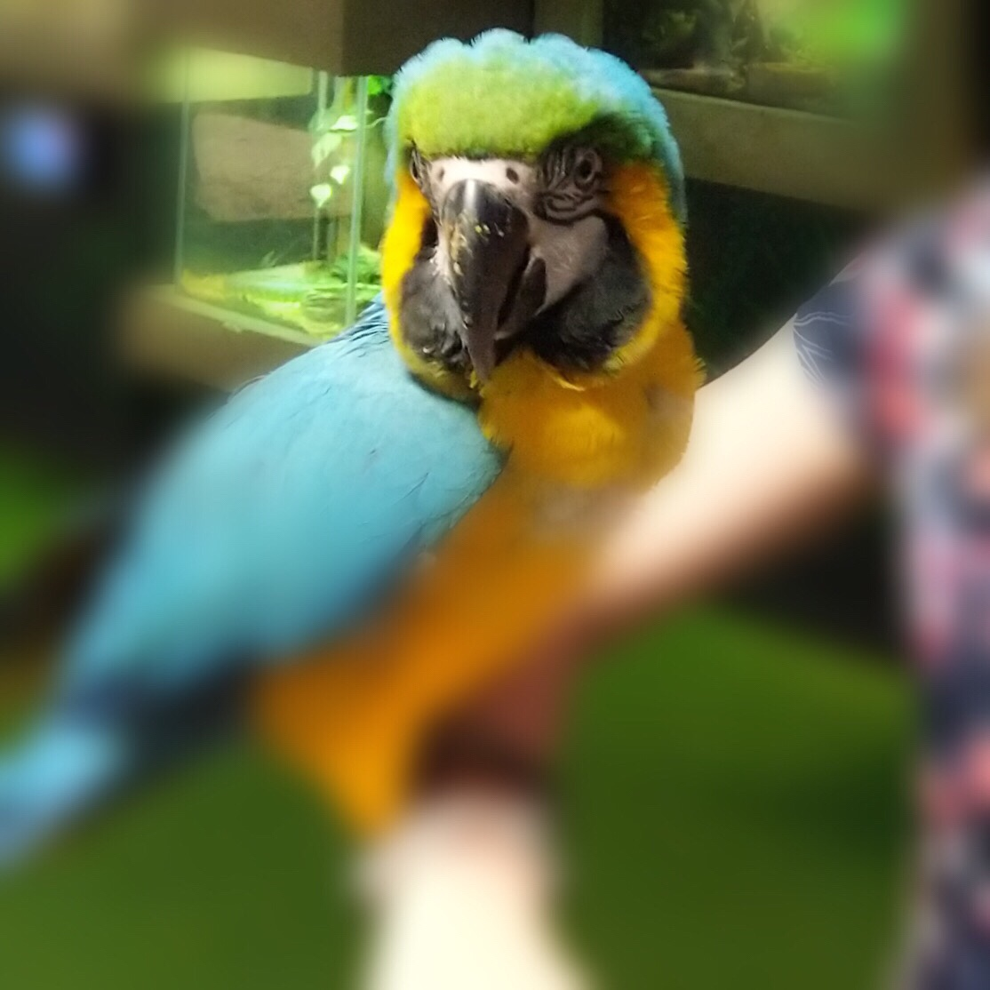 A colorful parrot on Veronica's arm