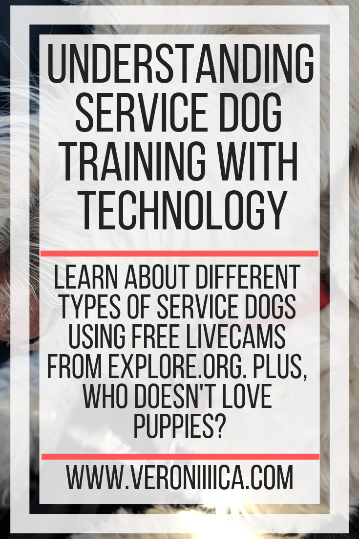 Learn about different types of service dogs using free livecams from explore.org. Plus, who doesn't love puppies?