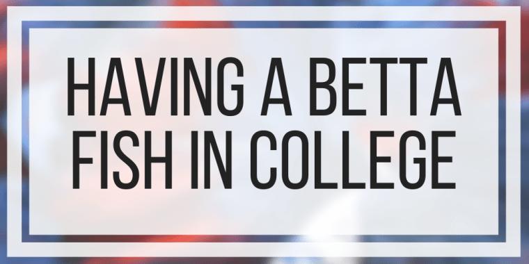 Having a Betta Fish In College