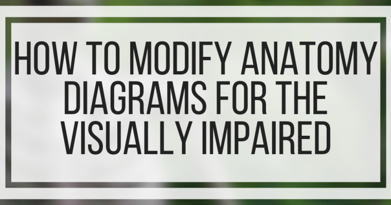 How To Modify Anatomy Diagrams For The Visually Impaired
